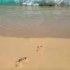 Thumbnail image for 5 Apps To Hide Your Digital Footprints Online
