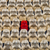 Thumbnail image for How to Make Your Blog Stand Out From the Crowd