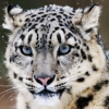 Thumbnail image for Friday Flick Find: Snow Leopard & Get A Mac Ad's