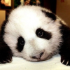 Thumbnail image for How to Survive the Google Panda Update
