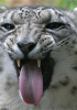 Thumbnail image for I Should Have Waited With Snow Leopard Installation – Too Many Incompatiblity Issues