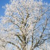 Thumbnail image for Photo of the week: Snowy tree